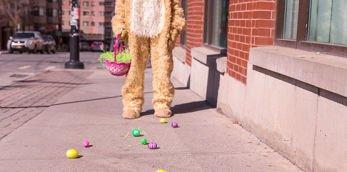 Osterhase hat Eier verloren