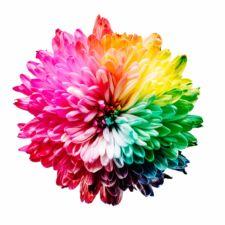 Corporate Design: Farbe und Schrift für Logo und Website